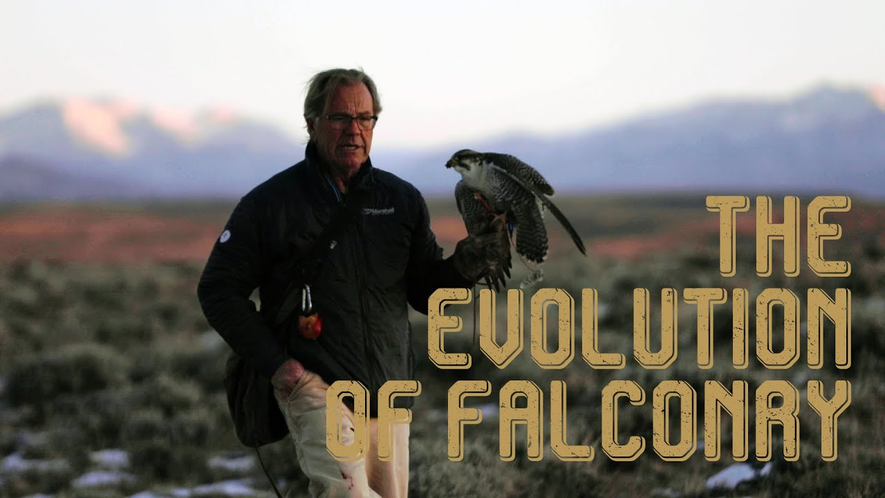 The Evolution of Falconry
