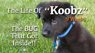 The Life Of Koobz - Wk 2 - The Bug