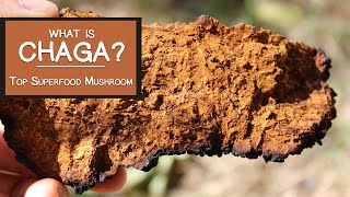 What is Chaga?  Learn Why It