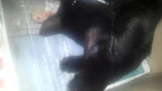 Feline birth