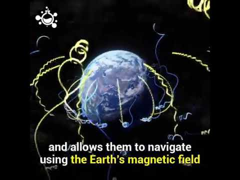 Birds can see Earth's magnetic field