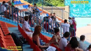 """Театр морских животных """"Акватория"""" (Ялта): игра со зрителями"""
