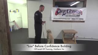 6-month Old Lou! Confidence Building!  Puppy Training Northern Virginia