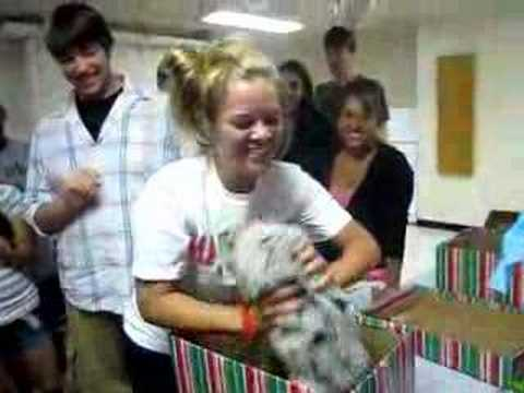 Puppy Surprise Australian Shepherd as a birthday gift in a Christmas box