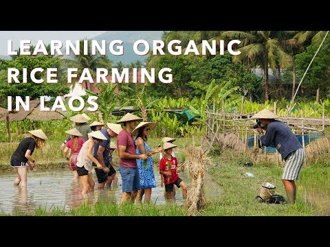learning-organic-rice-farming-in-laos---the-living-land-farm