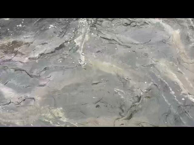 Ihmsen - Der Forellengott Forellensee Rosenweiher Weiterhin Störe für's Nachtprogramm✌️