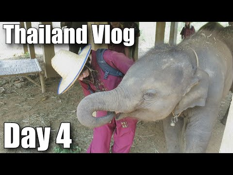 Thailand Travel Vlog: PLAYING WITH ELEPHANTS