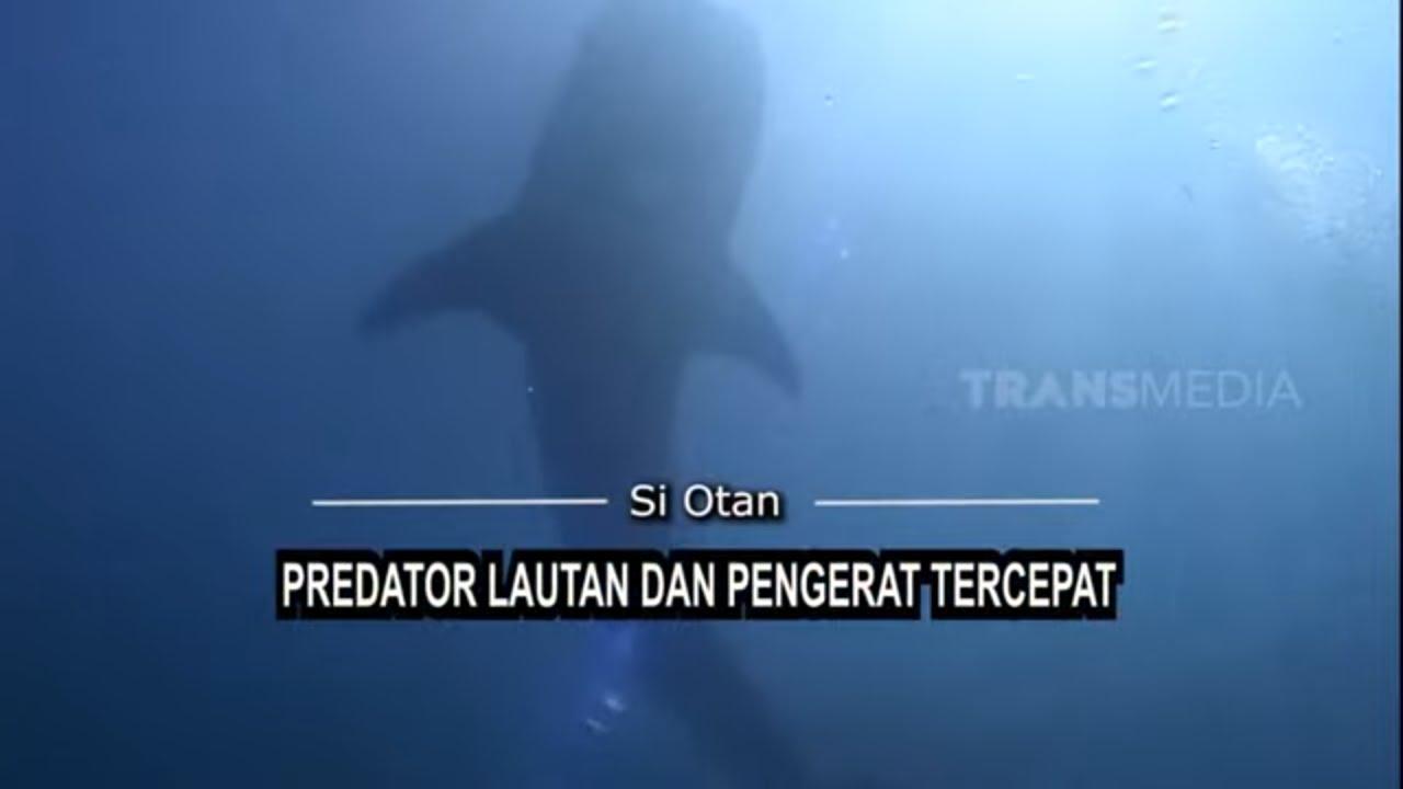 [FULL] Predator Lautan Dan pengerat Tercepat    SI OTAN (30/07/21)