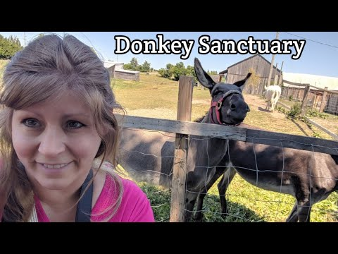 My Trip To Primrose Donkey Sanctuary