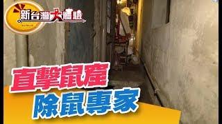 除鼠專家到你家 直擊鼠窟追追追《新台灣大體驗》第229集