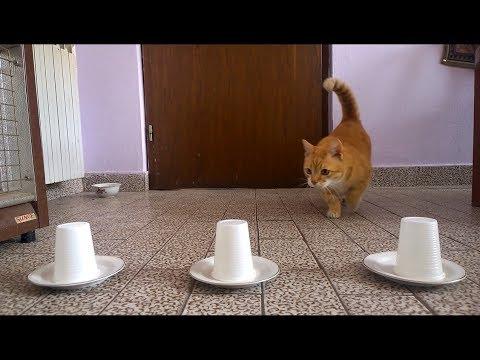 Cat's Sense of Smell -Test