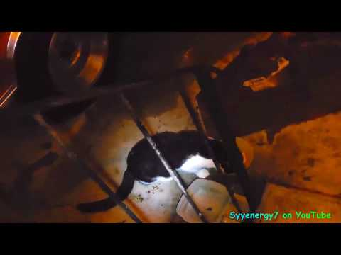 Panda CAT shows up in Hurricane IRMA