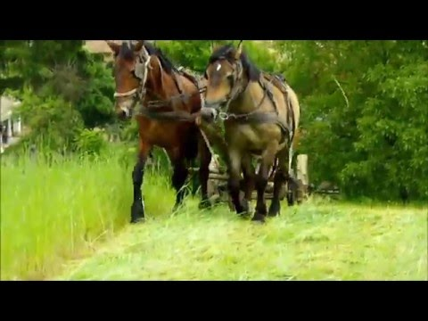 Kaszálás lovakkal Zalabér  2014.05.11. videó letöltése
