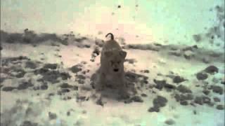 Snow Too Deep For My Miniature Schnauzer | Sneg Je Već Predubok Za Mog šnaucera