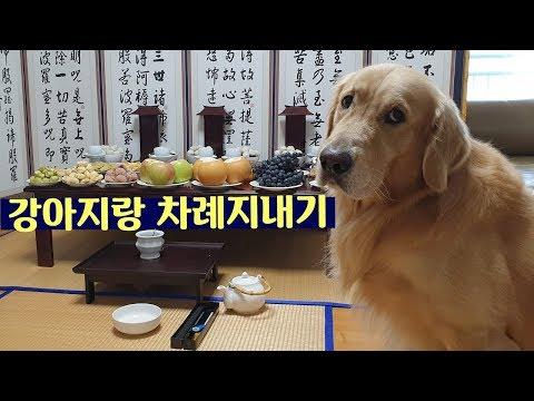 골든리트리버랑 추석보내기 | 즐거운 차례 with밤비&밤빵| 추석지내는 강아지