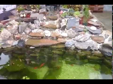 Natural koi pond and water feature in trinidad youtube for Natural fish pond