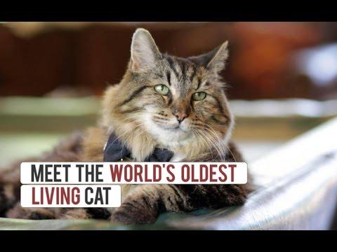 Meet The World's Oldest Cat Aged 26
