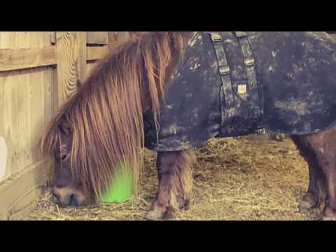 Cavallo Cute Little Boot (CLB