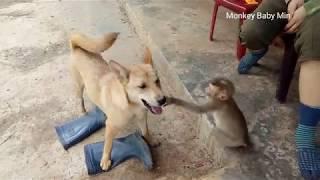 Amazing!  Monkey and dog fight - funny