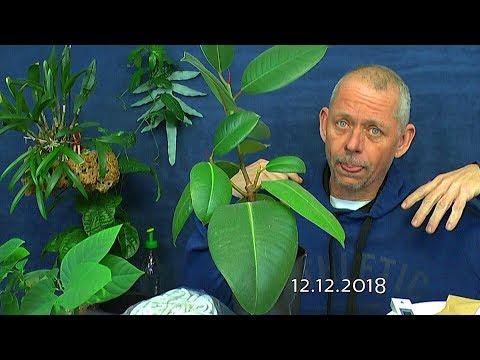 Detlef dreht durch, persönliche Neuigkeiten vom 12.12.2018