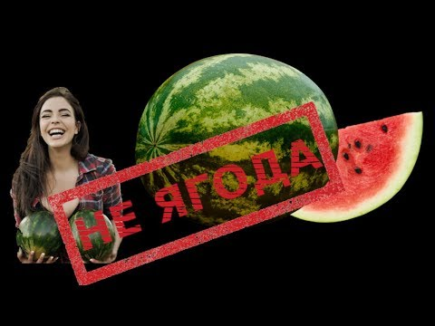 Арбуз - это не ягода! Понятненько?