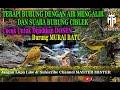 Terapi Burung Dengan Air Mengalir Dan Suara Burung Ciblek  Mp3 - Mp4 Download