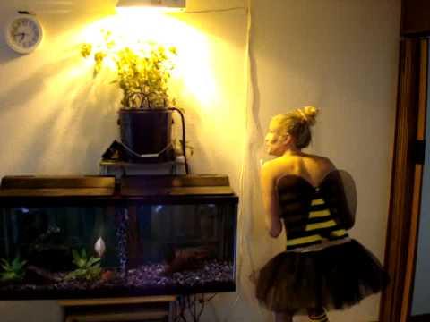 Aquaponics With Oscar Fish Indoor