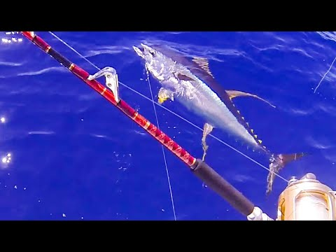 Live Bait Fishing For Yellowfin Tuna In Hawaii | Fishing In Hawaii | Tuna Compilation At The End!