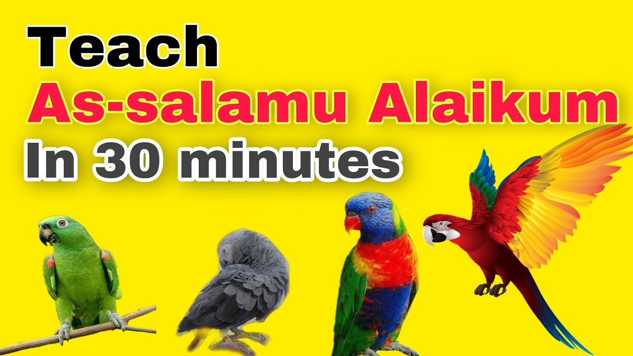 TEACH YOUR PARROT TO TALK