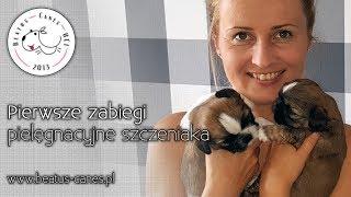 Pierwsze zabiegi pielęgnacyjne szczeniaka