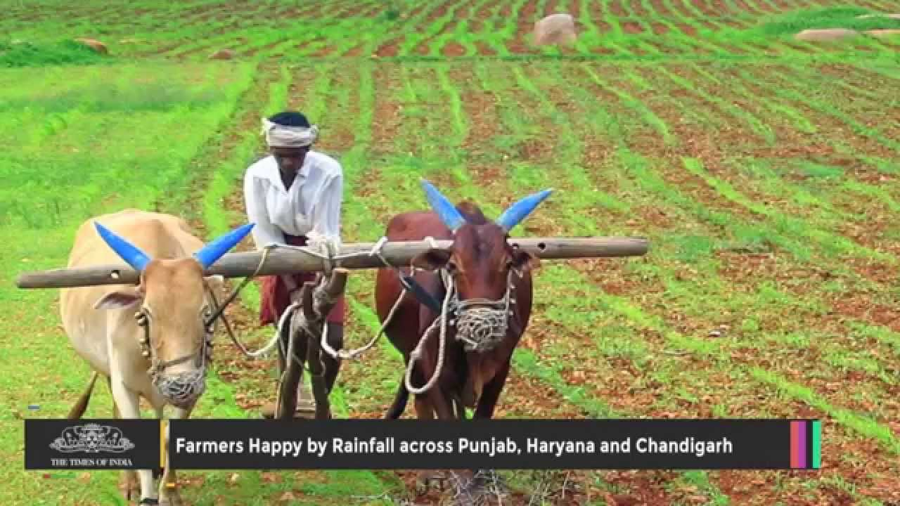 Farmers Happy by Rainfall Across Punjab, Haryana and Chandigarh ... for Happy Punjab Farmers  186ref
