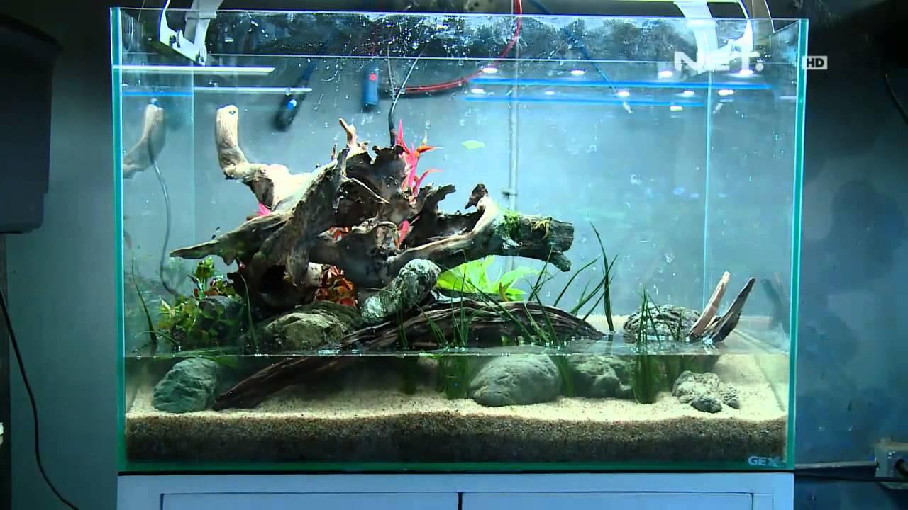 Net17 Cantiknya Aquascape Di Jakarta Youtube