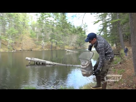 Trout Stocking With Mass Wildlife Division | Connecting Point | May 20, 2019