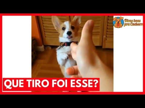 Que Tiro Foi Esse?! Versão Canina – Cachorro Meme| Jojo Maronttinni | Jojo Todynho
