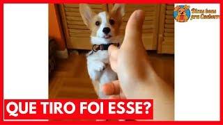 Baixar Que Tiro Foi Esse?! Versão Canina – Cachorro Meme| Jojo Maronttinni | Jojo Todynho