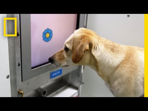 Brain Games for Old Dogs Could Improve Their Mental Health | National Geographic