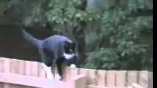 مقاطع قطط ظريفة ومضحكة جدا   __-