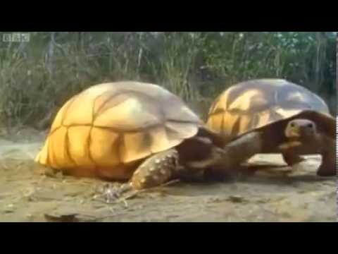 Funny Talking Animals   Walk On The Wild Side BBC One   Episode 3 Part 3