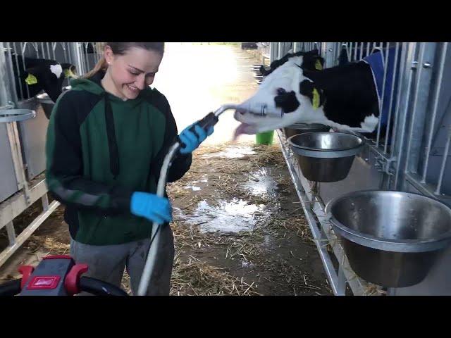 Farm #WithMe - Cow Farming, Milk Feeding, Pretty Girl Modern TATRA Military Truck, Cowshed Cleaning