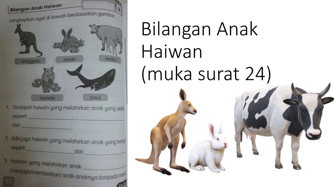 Buku Aktiviti Sains Tahun 2 Haiwan Perbincangan Jawapan Youtube
