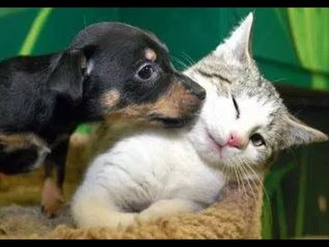 Thumbnail: Kittens Meet Puppies For The First Time Try Not to Laugh! - Cats Meeting Dogs, Funny Kitty Cats