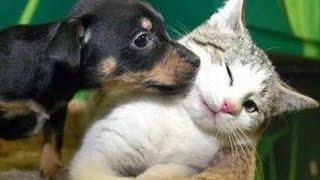 Kittens Meet Puppies For The First Time Try Not to Laugh!  Cats Meeting Dogs, Funny Kitty Cats