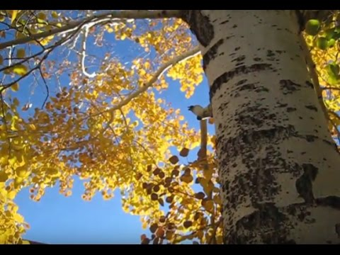 Fall Foliage at New Mexico Welcome Center