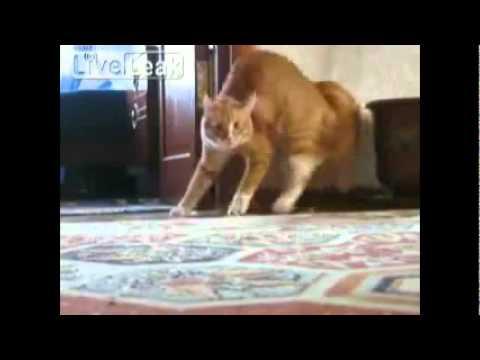 Кот ушел картинка