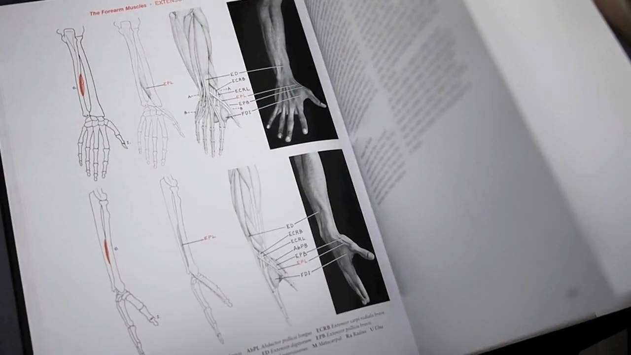 Human Anatomy For Artists The Elements Of Form Youtube