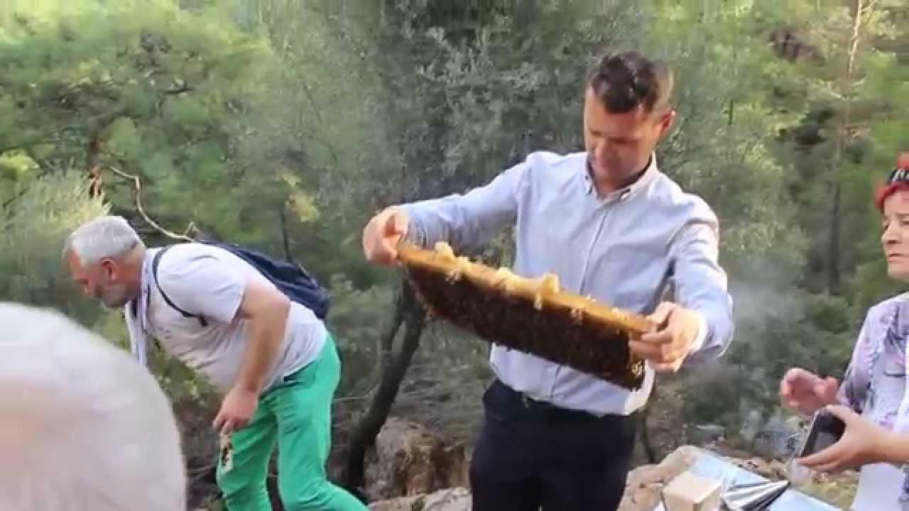 26 дек 2014. Это становится возможным благодаря насекомым, вырабатывающим падь. Это падевый мед. Во франции такой мед называется miel.