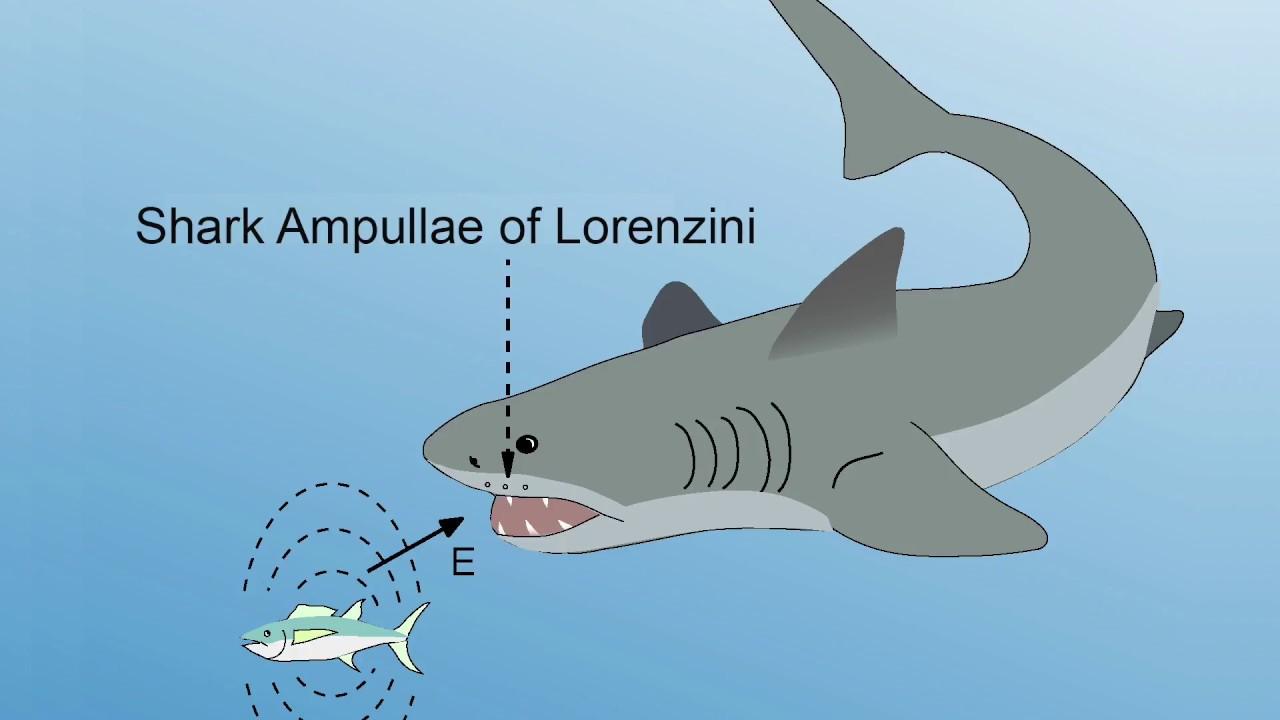 INTERVIEW EXTRA: Ampullae of Lorenzini - YouTube