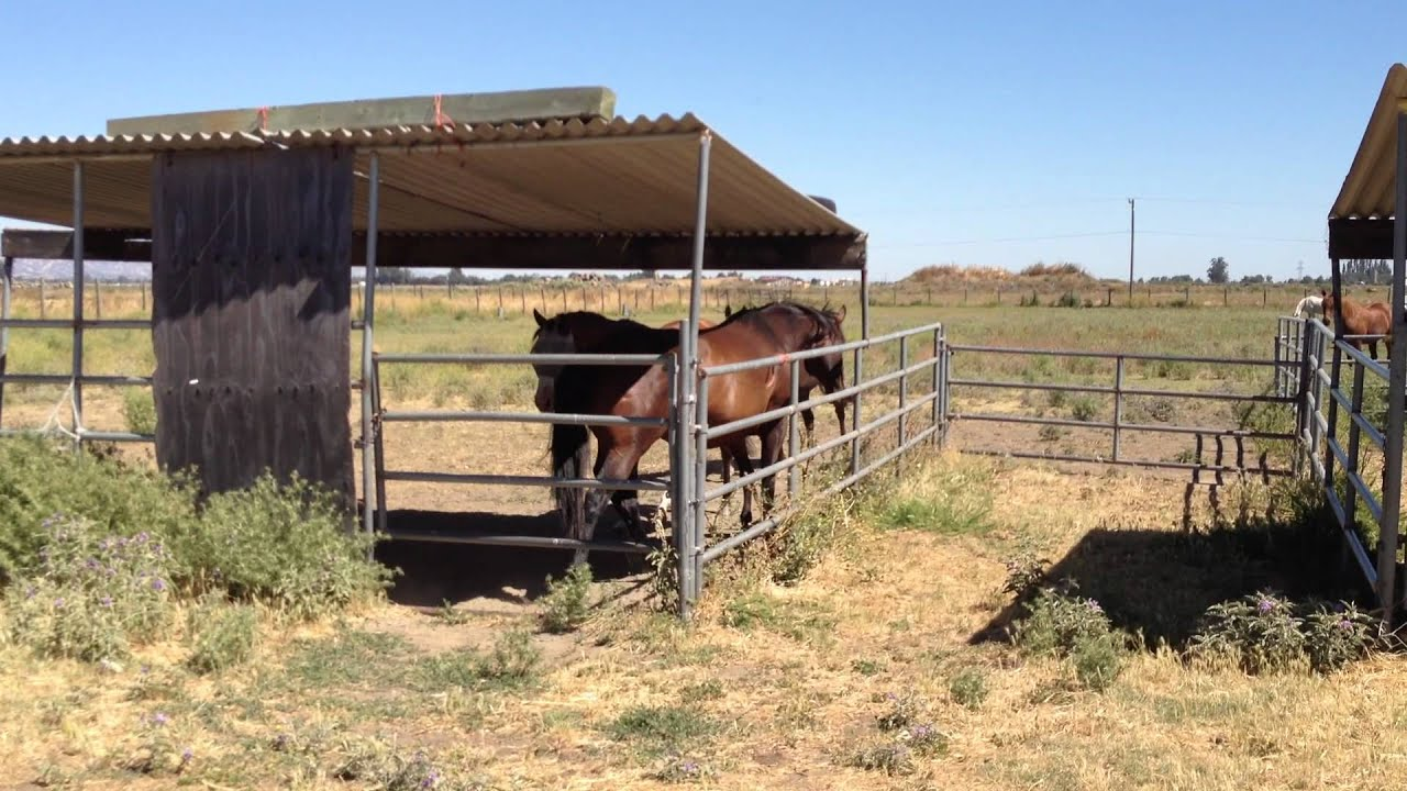 how to make a horse shelter