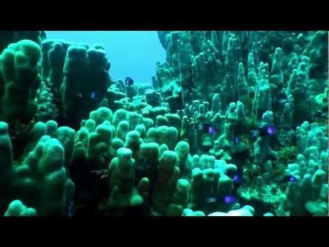 Mundo Submarino Salas y Gómez, Expedición Oceana y National Geographic