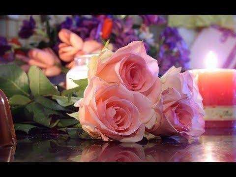Футаж Распускающаяся роза